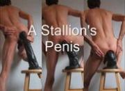 Anal and The Stallion\'s Penis