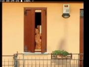 My neighbor cleans the windows