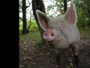 Endstation Polska 10 Euro Schweine Puff - Der Abschaum