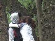 voyeur tree