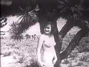 Desert Nymphs loyalsock