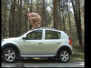 Wanking on the roof of a car