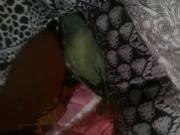 Paki GF Kashish playing with Parrot