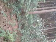 Abgespritzt im Wald in Rodenberg