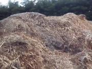 WANK CUM farm field