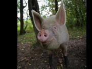 Endstation 10$ Schweine Puff 1 Der Abschaum