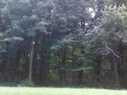Park flash 2