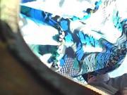 upskirt saia azul florada