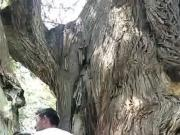 Ormanlik alanda gizli sakli fena vuruyor yabanci