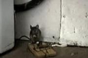Epic Mouse Trap Fail