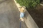 The Amazing Peeing Dog