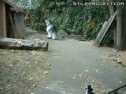 Realistic 4-legged Wolf Costume