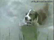 Dog Goes Fishing