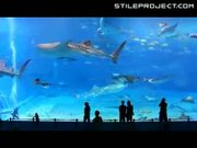 worlds second largest aquarium