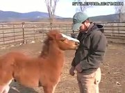 Horse Plays With Zipper
