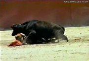 Midget Matador Vs. Bull