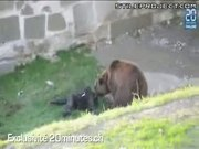 bear mauls man who jumped into its enclosure at the zoo