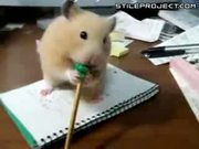 Give Me Back My Pencil