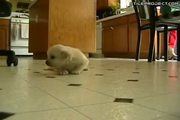 Moonwalking Puppy