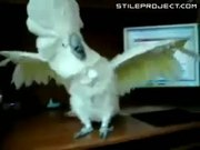 My parrot loves Death Metal !!!