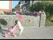 Pug Dog Walks Like People