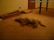 dog sleep runs into wall