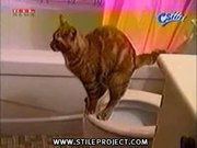cat shits in a toilet - potty trained cat! wow!