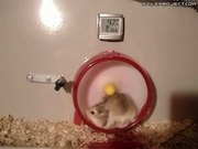 Go Speed Hamster, Go!
