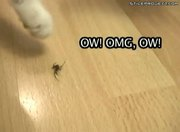 Cat Vs. Spider
