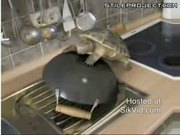 turtle tries to fuck a pot thinking its another turtle