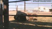 Bull Vs. Taser