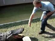 idiot puts his hand in a crocodiles mouth and gets chomped