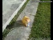 Why People Don't Walk Cats