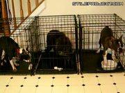 Smart dog escape then breaks loose his friends