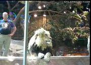 lion attacks trainer