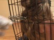 Caged sex slave gets teased & fucked.